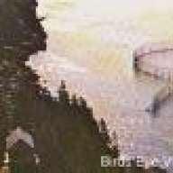 bird mcbride