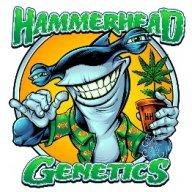 Hammerhead571