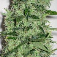 Growerguy420