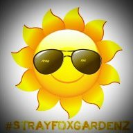 strayfox gear