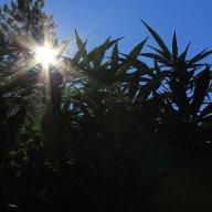 Oregon Gardener
