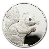 Silver Squirrel