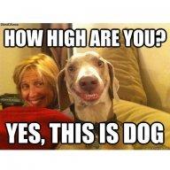 Yesdog
