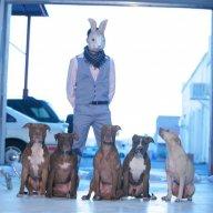 Zoom Rabbit