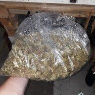 Weed597